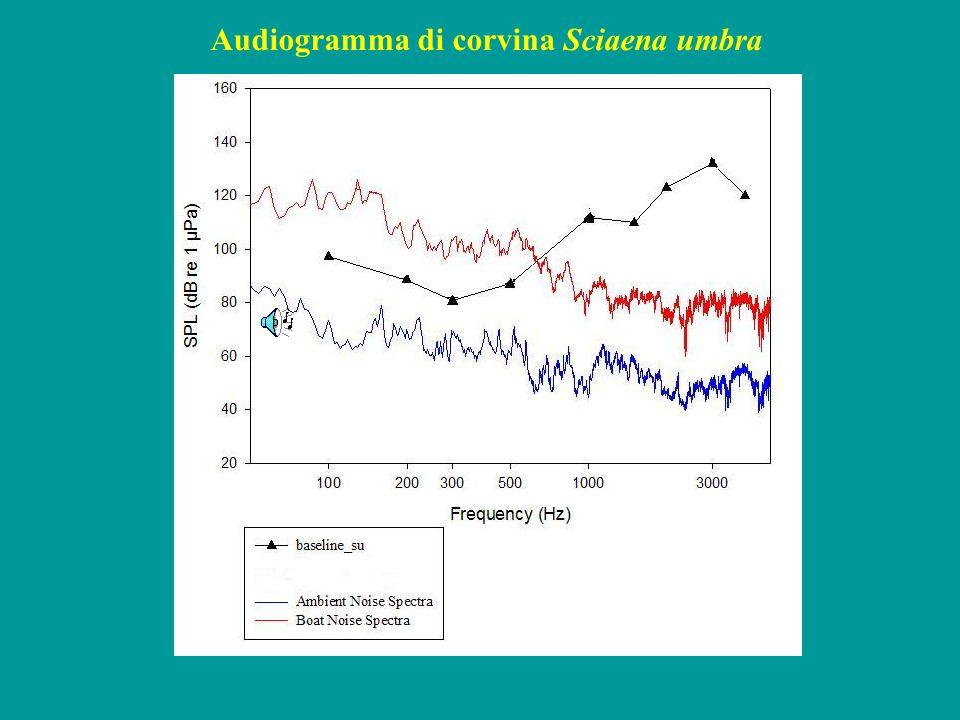 c) Sonogramma: relaziona le frequenze al tempo; indica inoltre differenti livelli di intensità, a determinate frequenze, con una gradazione di colori