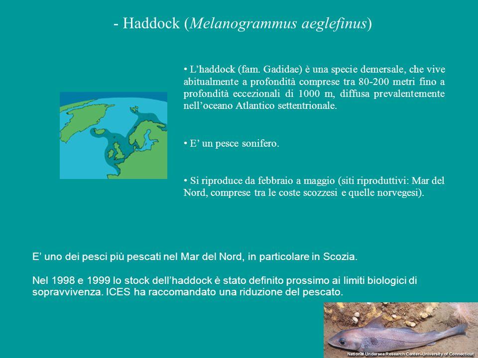 Playback di suoni di haddock (Melanogrammus aeglefinus) la ripetizione regolare di unità acustiche identiche in un pattern ben definito e di lunga durata, rappresenta il tipico richiamo creato per permettere la localizzazione e lidentificazione dellemettitore anche da grandi distanze (Winn 1981).