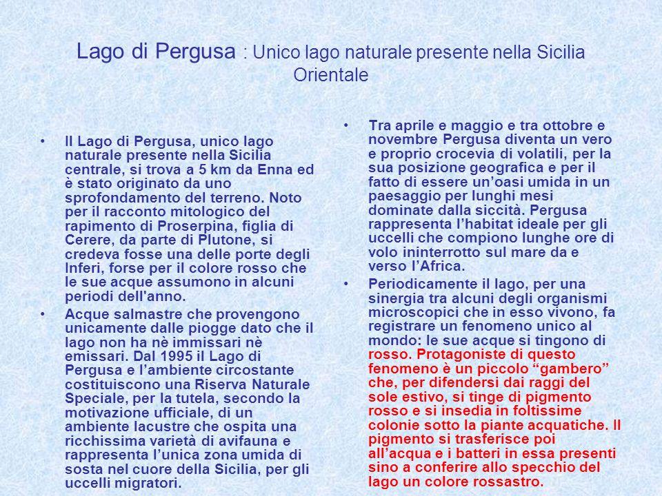 Lago di Pergusa : Unico lago naturale presente nella Sicilia Orientale Il Lago di Pergusa, unico lago naturale presente nella Sicilia centrale, si tro