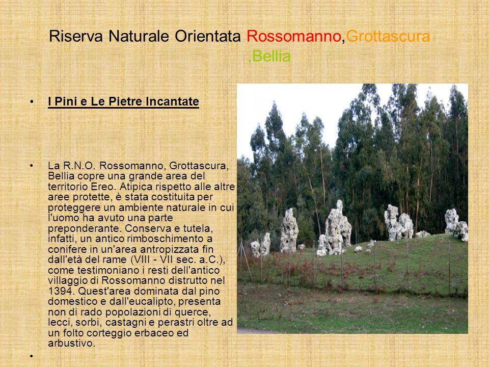 Riserva Naturale Orientata Rossomanno,Grottascura,Bellia I Pini e Le Pietre Incantate La R.N.O. Rossomanno, Grottascura, Bellia copre una grande area