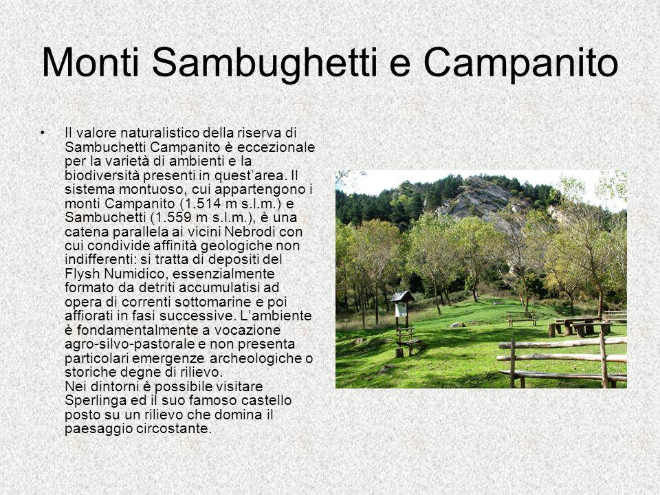 Monti Sambughetti e Campanito Il valore naturalistico della riserva di Sambuchetti Campanito è eccezionale per la varietà di ambienti e la biodiversit