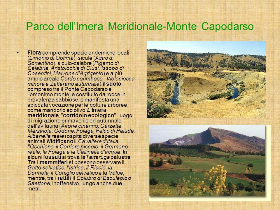 Flora comprende specie endemiche locali (Limonio di Optima), sicule (Astro di Sorrentino), siculo-calabre (Pigamo di Calabria, Aristolochia di Clusi,