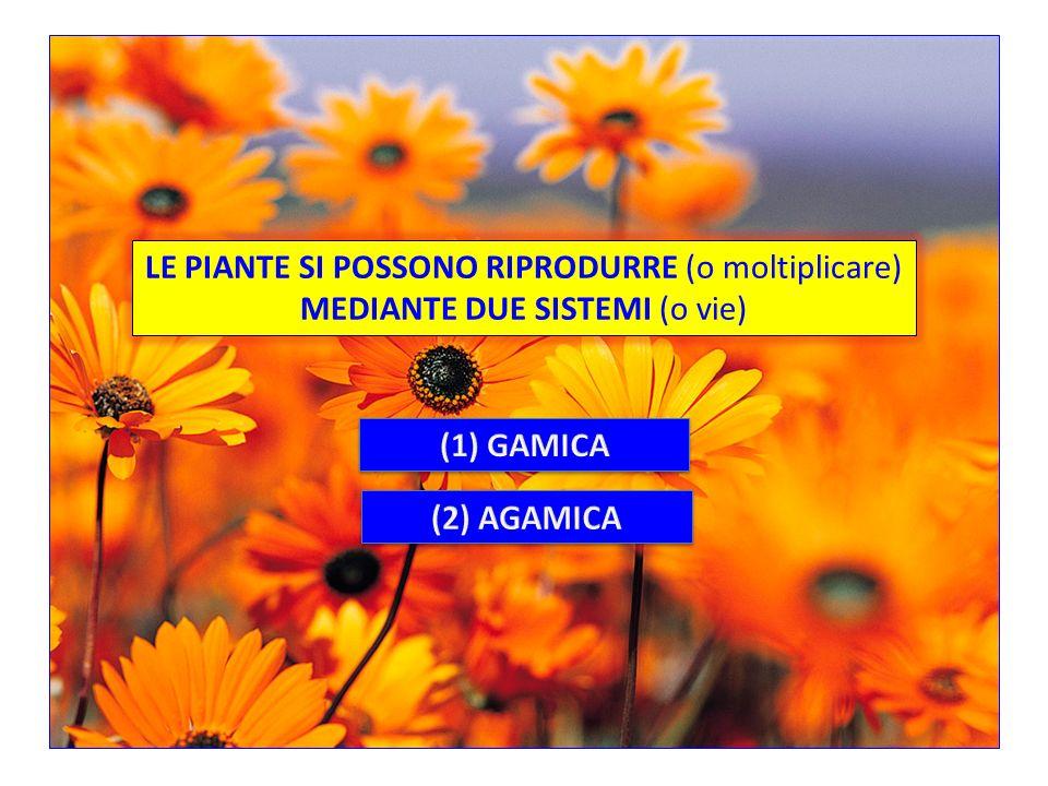 S. M.S. Arcadia Pertini Anno Scolastico 2011-2012 CLASSE I sez. ORIPRODUZIONE