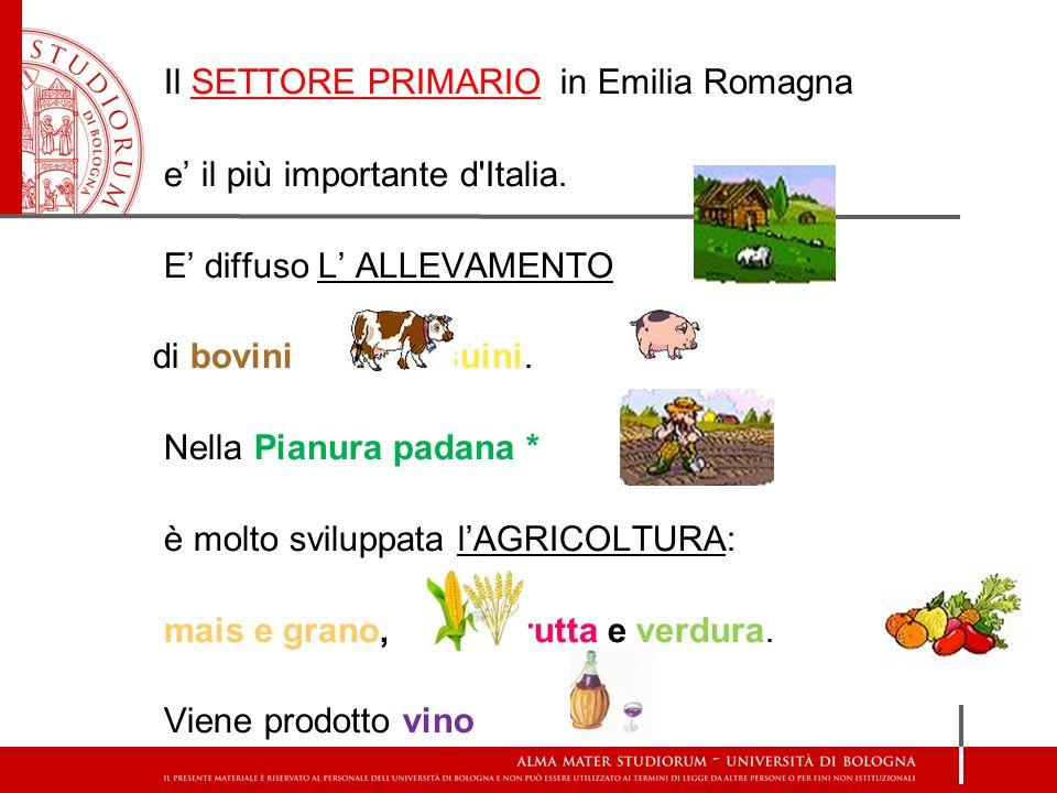 Il SETTORE PRIMARIO in Emilia Romagna e il più importante d'Italia. E diffuso L ALLEVAMENTO di bovini e suini. Nella Pianura padana * è molto sviluppa