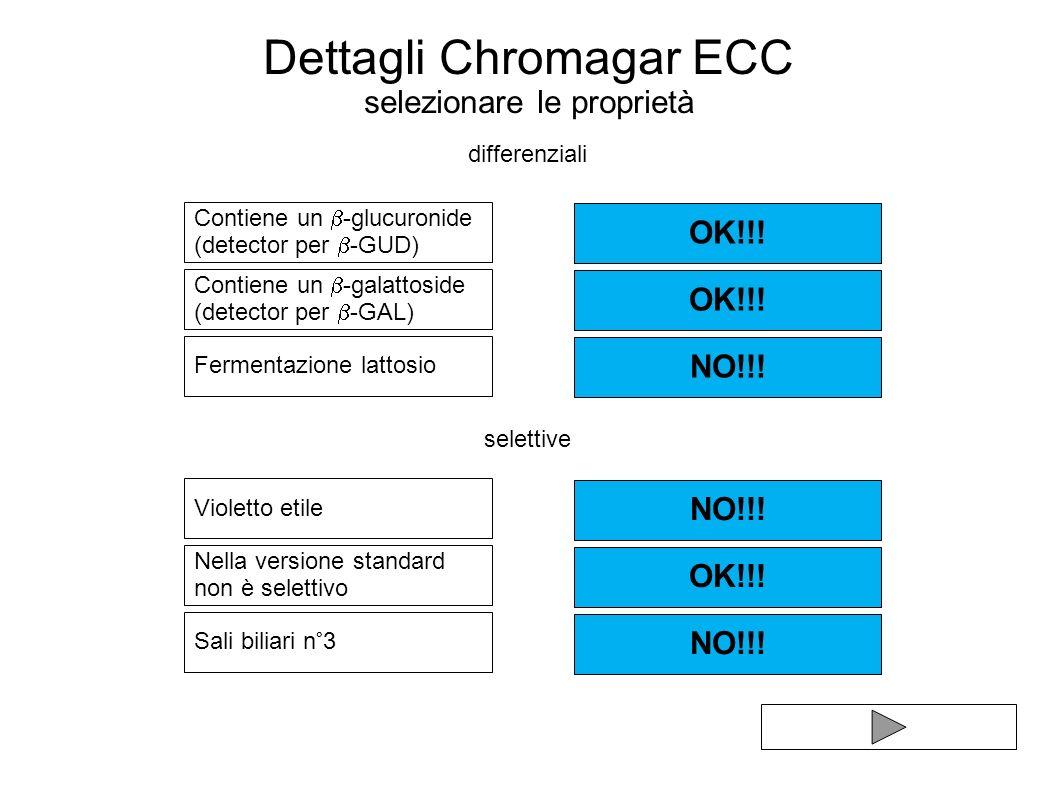 Dettagli Chromagar ECC selezionare le proprietà Contiene un -glucuronide (detector per -GUD) Violetto etile Contiene un -galattoside (detector per -GA