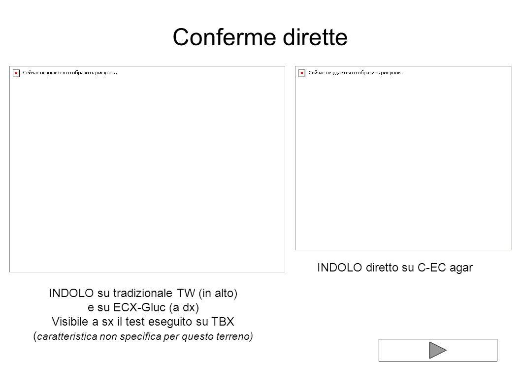 Conferme dirette INDOLO diretto su C-EC agar INDOLO su tradizionale TW (in alto) e su ECX-Gluc (a dx) Visibile a sx il test eseguito su TBX ( caratter