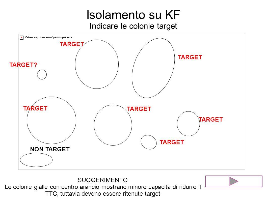 Isolamento su KF Indicare le colonie target TARGET NON TARGET TARGET TARGET? SUGGERIMENTO Le colonie gialle con centro arancio mostrano minore capacit
