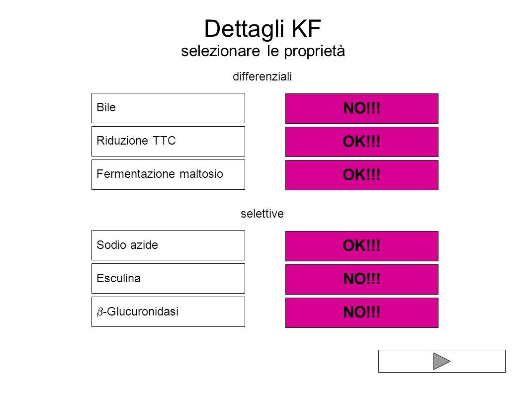 Dettagli KF selezionare le proprietà Bile Sodio azide Riduzione TTC Esculina NO!!! OK!!! Fermentazione maltosio OK!!! NO!!! OK!!! -Glucuronidasi NO!!!