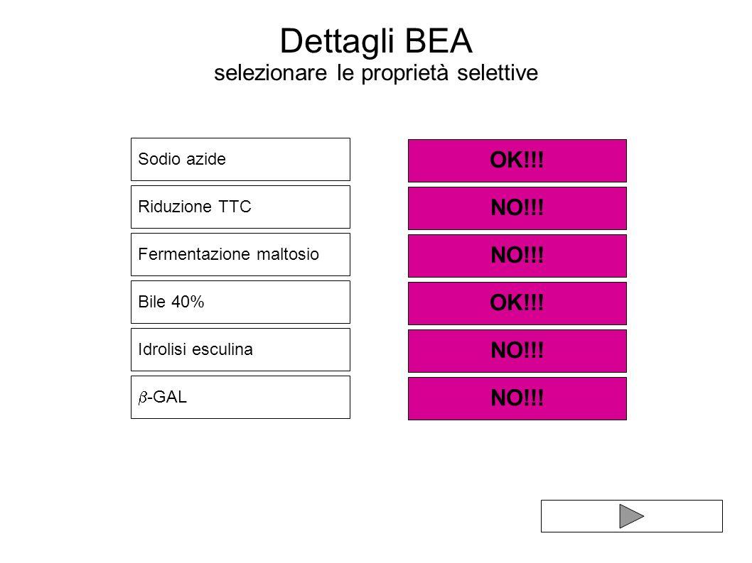 Dettagli BEA selezionare le proprietà selettive Sodio azide Bile 40% Riduzione TTC Idrolisi esculina OK!!! NO!!! Fermentazione maltosio OK!!! NO!!! -G