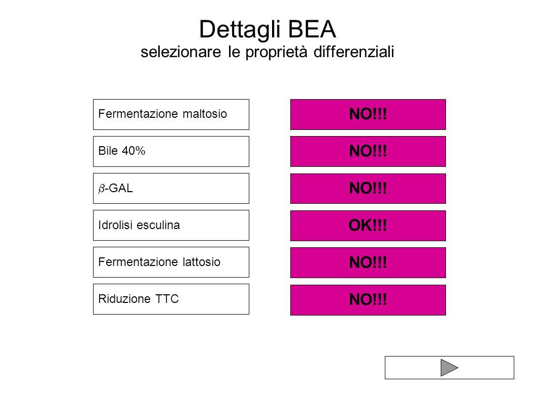 Dettagli BEA selezionare le proprietà differenziali Fermentazione lattosio Bile 40% Riduzione TTC Idrolisi esculina NO!!! Fermentazione maltosio NO!!!