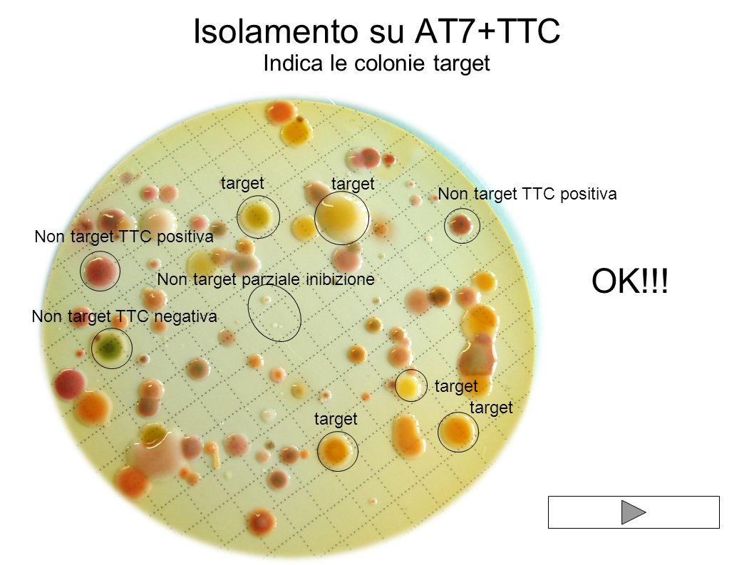 Isolamento su AT7+TTC Indica le colonie target target Non target TTC positiva Non target parziale inibizione target Non target TTC negativa target OK!