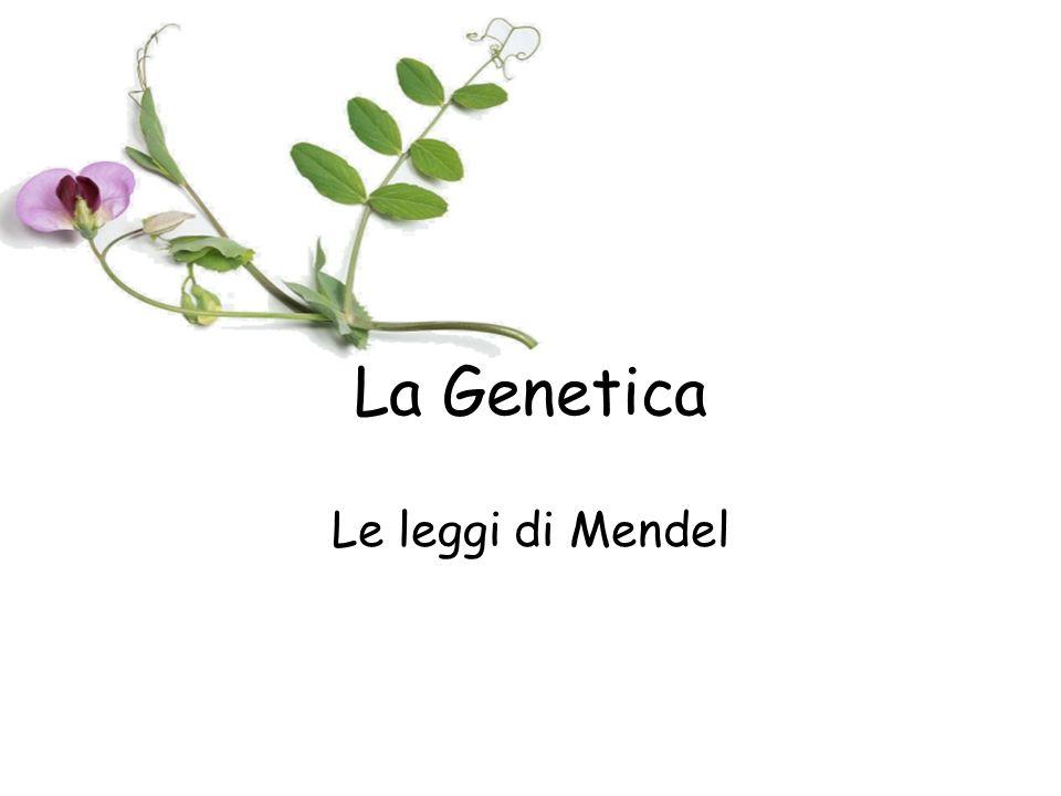 La Genetica Le leggi di Mendel