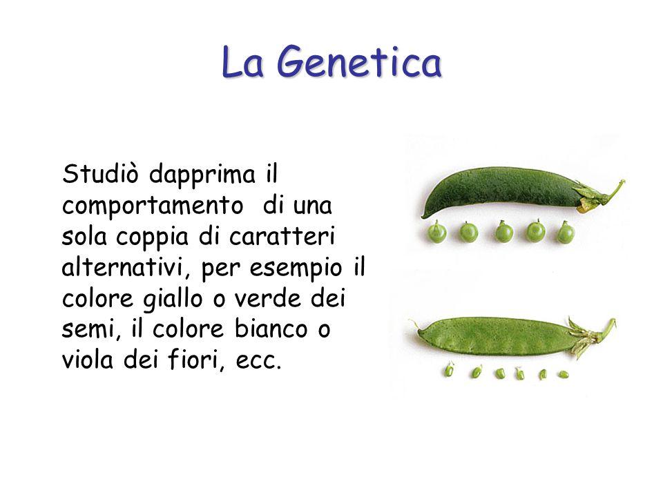 Con la fecondazione artificiale Mendel selezionò piante di razza pura per alcuni caratteri.