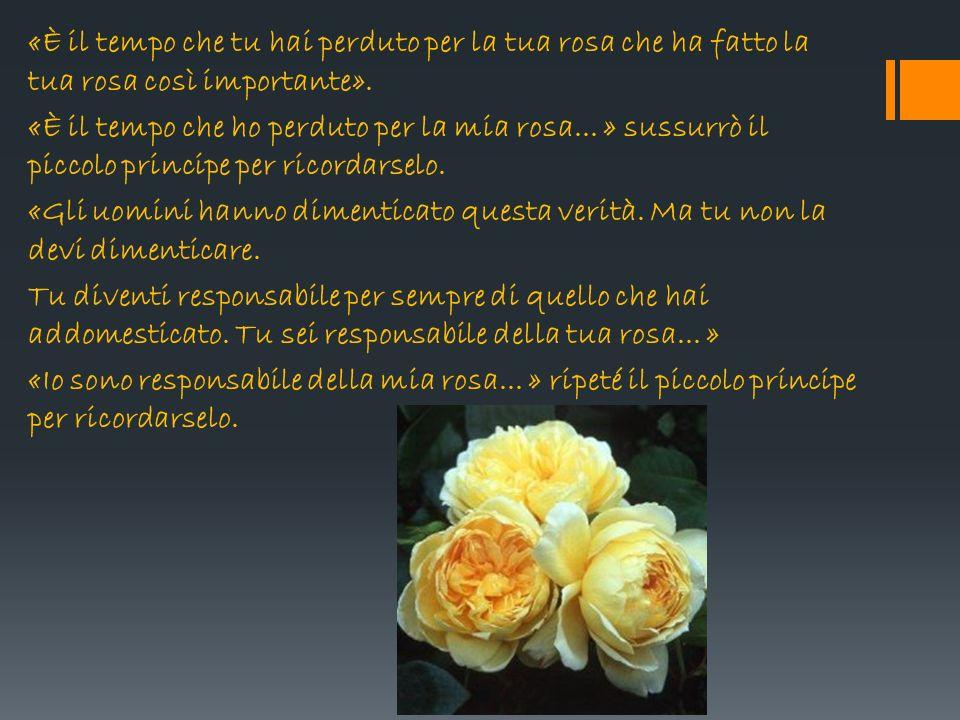 «È il tempo che tu hai perduto per la tua rosa che ha fatto la tua rosa così importante». «È il tempo che ho perduto per la mia rosa... » sussurrò il