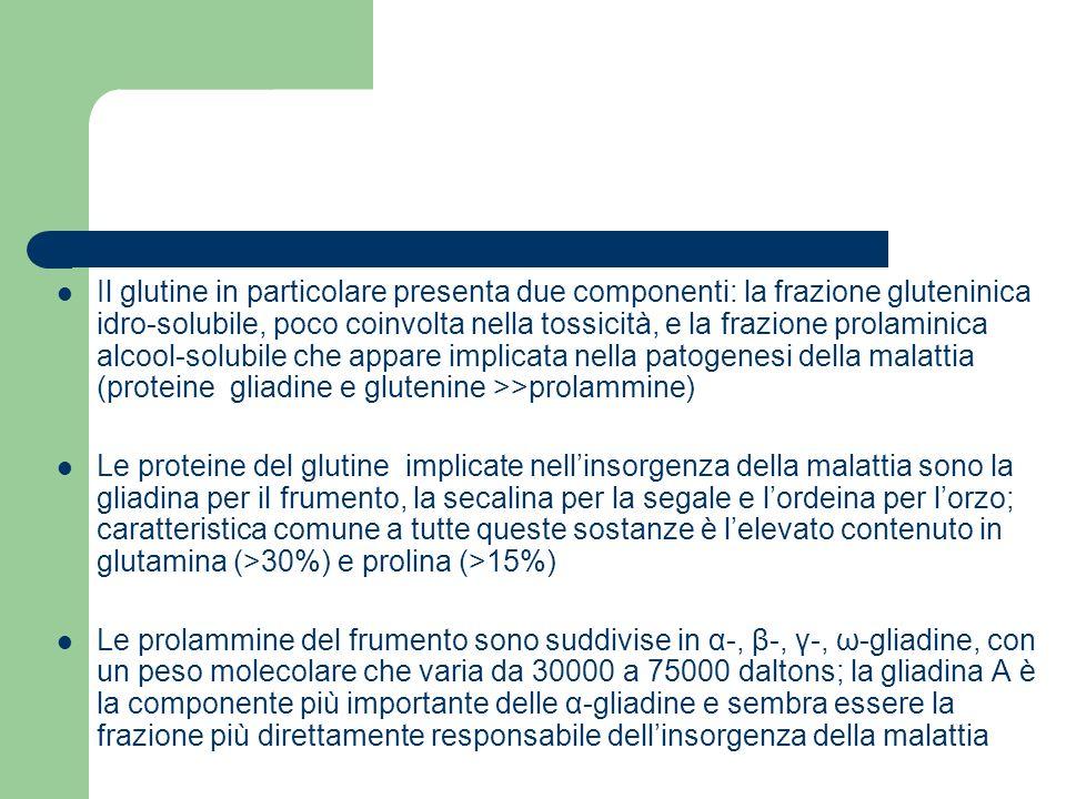 Il glutine in particolare presenta due componenti: la frazione gluteninica idro-solubile, poco coinvolta nella tossicità, e la frazione prolaminica al
