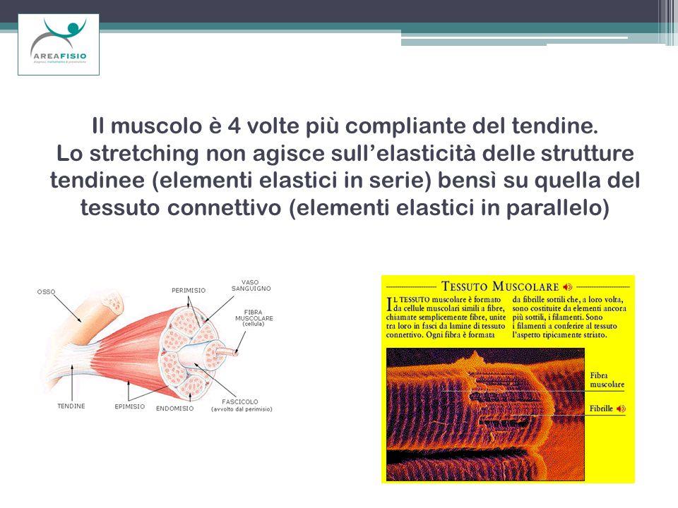 Il muscolo è 4 volte più compliante del tendine. Lo stretching non agisce sullelasticità delle strutture tendinee (elementi elastici in serie) bensì s