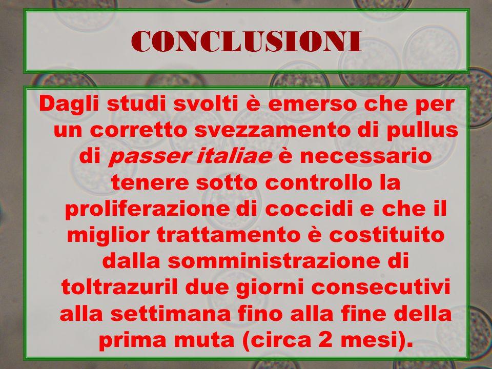 CONCLUSIONI Dagli studi svolti è emerso che per un corretto svezzamento di pullus di passer italiae è necessario tenere sotto controllo la proliferazi