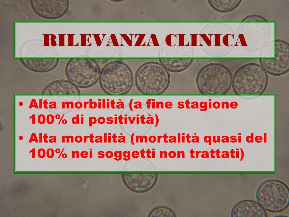 RILEVANZA CLINICA Alta morbilità (a fine stagione 100% di positività) Alta mortalità (mortalità quasi del 100% nei soggetti non trattati)