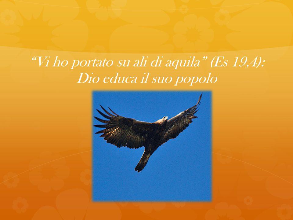 Vi ho portato su ali di aquila (Es 19,4): Dio educa il suo popolo