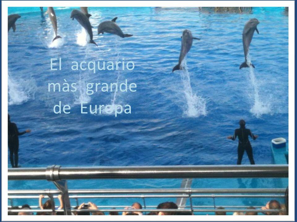 El acquario màs grande de Europa