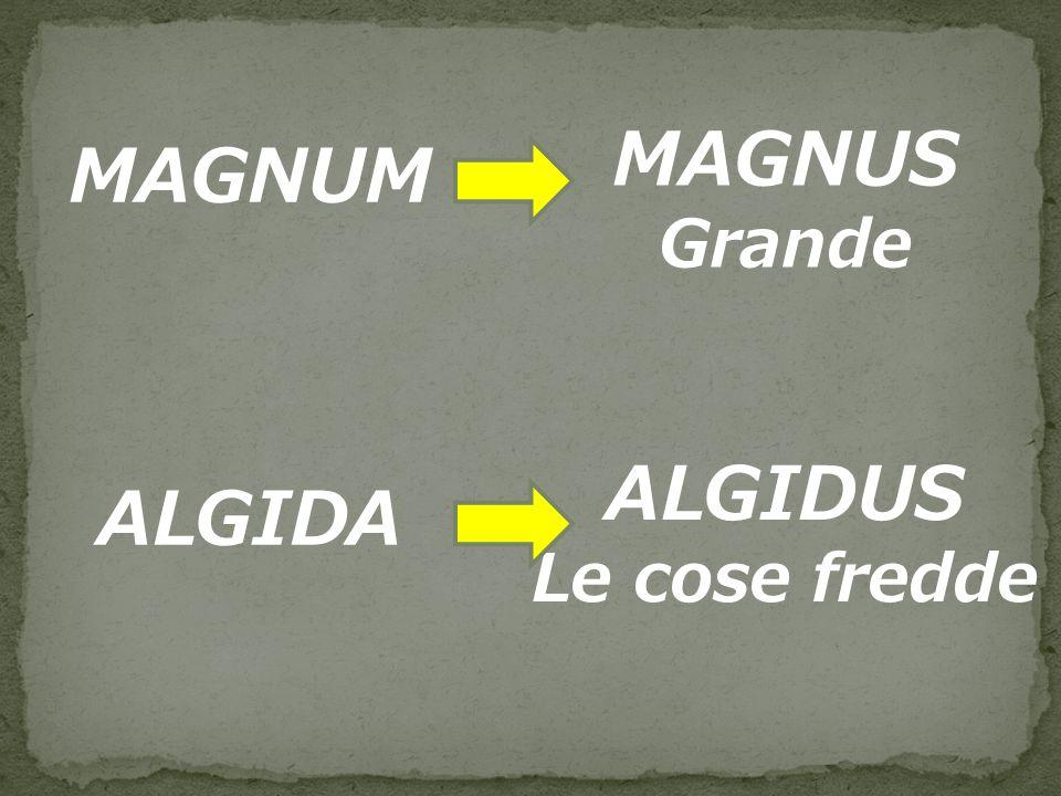 MAGNUM MAGNUS Grande ALGIDA ALGIDUS Le cose fredde