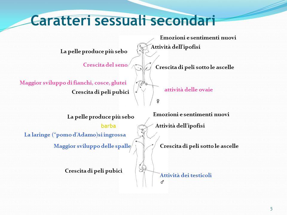 Caratteri sessuali secondari 5 Emozioni e sentimenti nuovi Attività dellipofisi Crescita di peli sotto le ascelle attività delle ovaie Attività dei te
