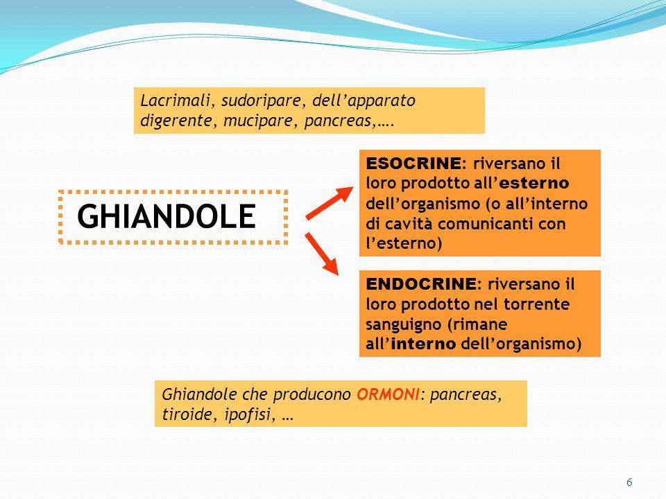 6 GHIANDOLE ESOCRINE : riversano il loro prodotto all esterno dellorganismo (o allinterno di cavità comunicanti con lesterno) ENDOCRINE : riversano il