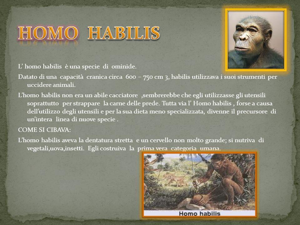 L homo habilis è una specie di ominide. Datato di una capacità cranica circa 600 – 750 cm 3, habilis utilizzava i suoi strumenti per uccidere animali.