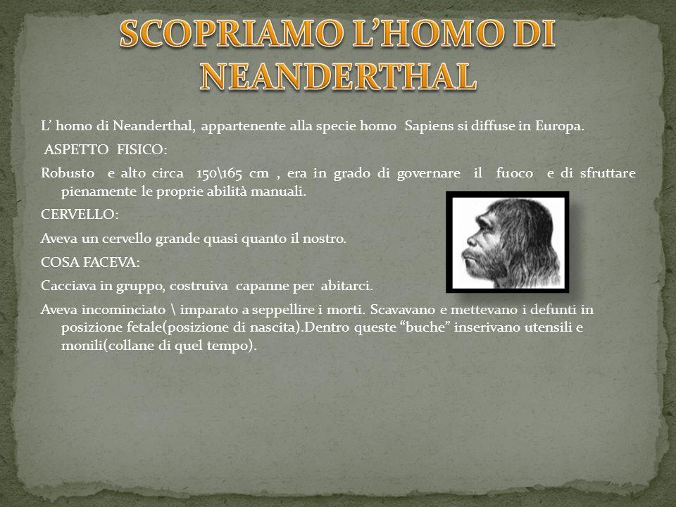 L homo di Neanderthal, appartenente alla specie homo Sapiens si diffuse in Europa. ASPETTO FISICO: Robusto e alto circa 150\165 cm, era in grado di go