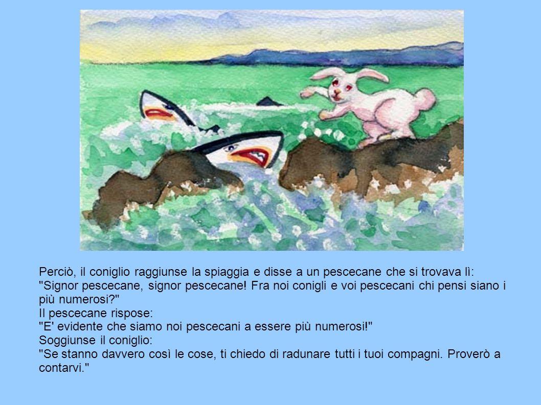Perciò, il coniglio raggiunse la spiaggia e disse a un pescecane che si trovava lì: