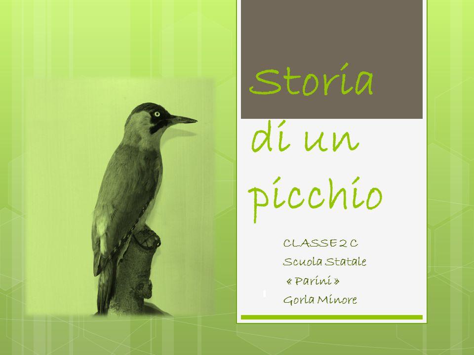 CLASSE 2 C Scuola Statale « Parini » Gorla Minore Storia di un picchio