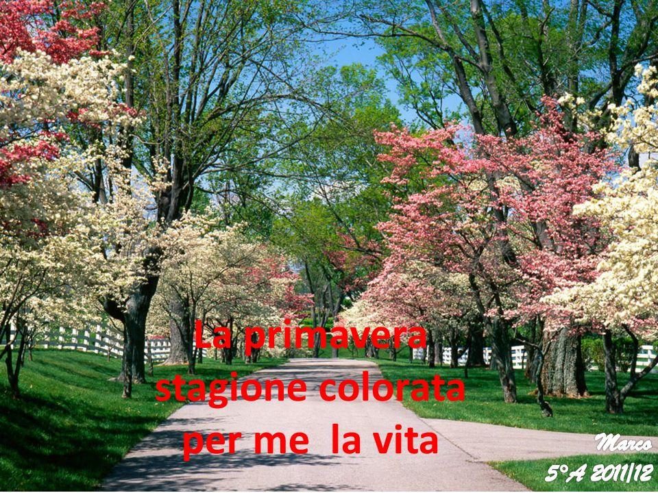 La primavera stagione colorata per me la vita