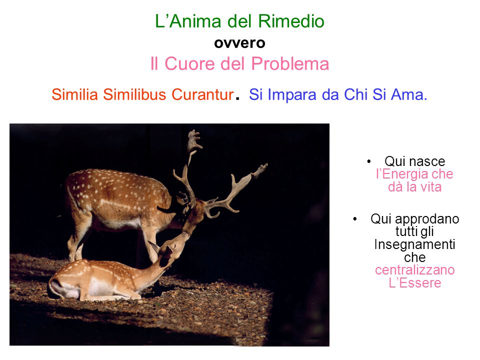 LAnima del Rimedio ovvero Il Cuore del Problema Similia Similibus Curantur.