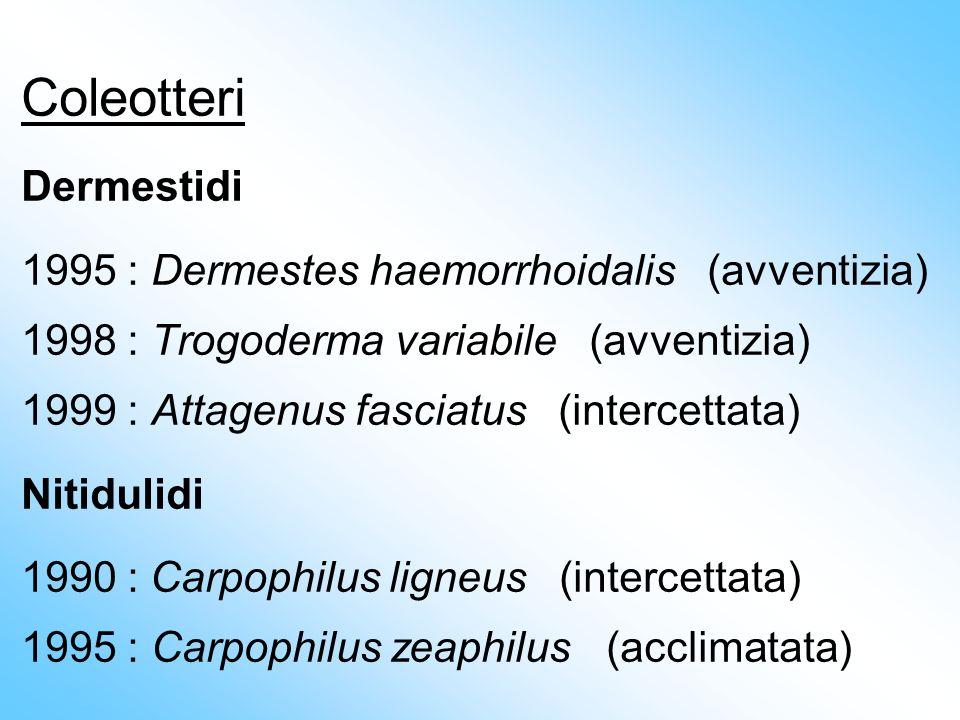 Coleotteri Dermestidi 1995 : Dermestes haemorrhoidalis (avventizia) 1998 : Trogoderma variabile (avventizia) 1999 : Attagenus fasciatus (intercettata)
