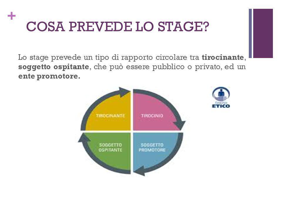 + COSA PREVEDE LO STAGE? Lo stage prevede un tipo di rapporto circolare tra tirocinante, soggetto ospitante, che può essere pubblico o privato, ed un