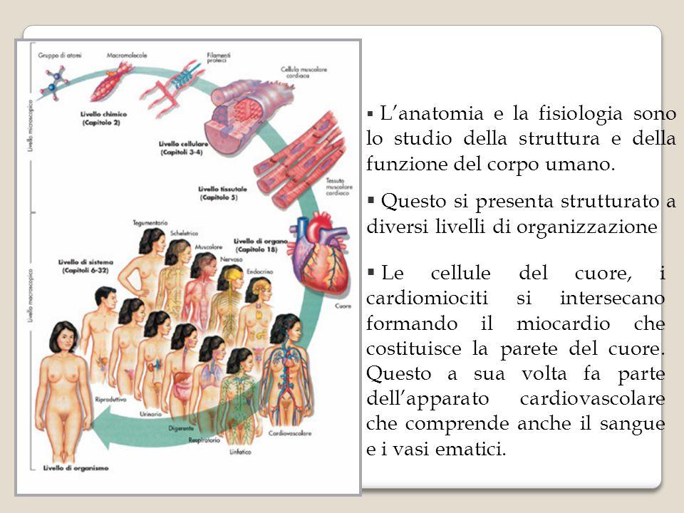 Lanatomia e la fisiologia sono lo studio della struttura e della funzione del corpo umano. Questo si presenta strutturato a diversi livelli di organiz
