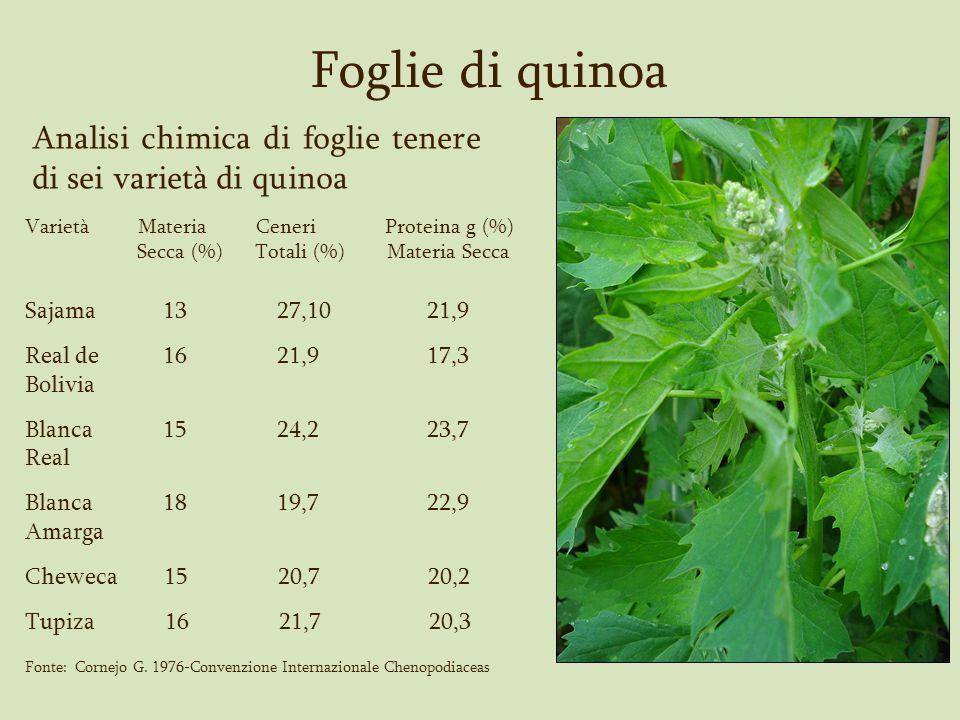 Foglie di quinoa Analisi chimica di foglie tenere di sei varietà di quinoa Varietà Materia Ceneri Proteina g (%) Secca (%) Totali (%) Materia Secca Sa