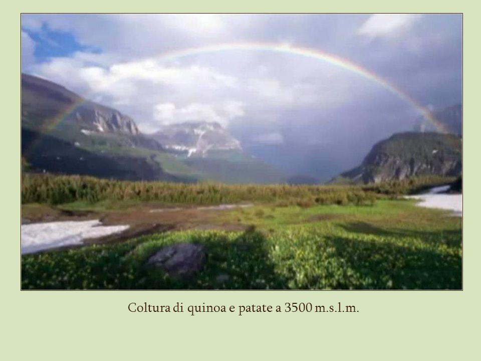 Coltura di quinoa e patate a 3500 m.s.l.m.