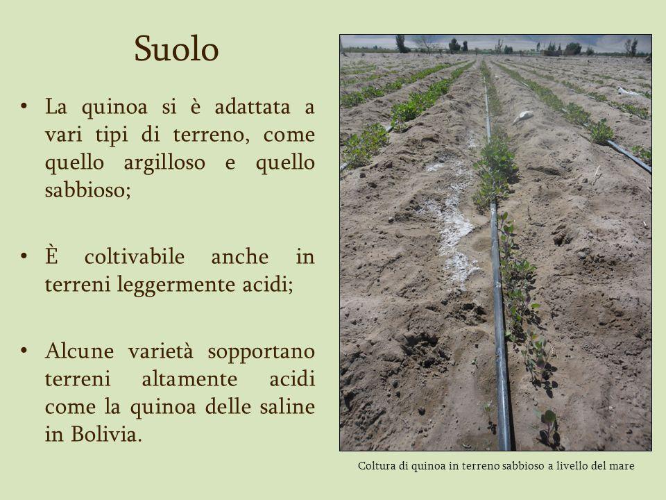 Suolo La quinoa si è adattata a vari tipi di terreno, come quello argilloso e quello sabbioso; È coltivabile anche in terreni leggermente acidi; Alcun