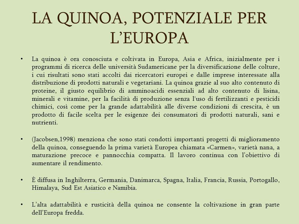 LA QUINOA, POTENZIALE PER LEUROPA La quinoa è ora conosciuta e coltivata in Europa, Asia e Africa, inizialmente per i programmi di ricerca delle unive