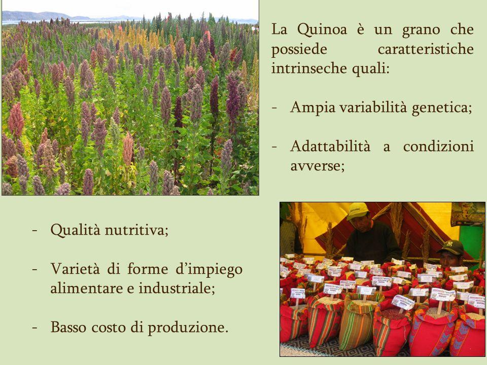 Quinoa: Caratteristiche Botaniche La pianta presenta un fusto legnoso eretto, che può essere ramificato o non ramificato, di altezza variabile dai 30 cm fino ai 3 m, a seconda della varietà di quinoa (Mujica et al., 2001).