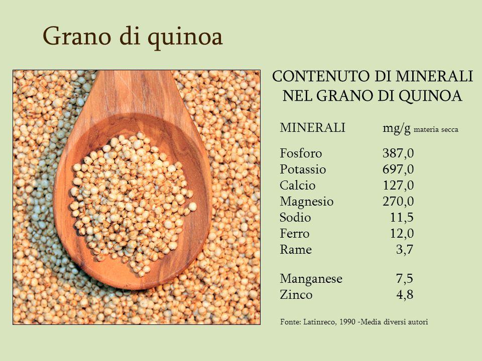 Foglie di quinoa Analisi chimica di foglie tenere di sei varietà di quinoa Varietà Materia Ceneri Proteina g (%) Secca (%) Totali (%) Materia Secca Sajama 13 27,10 21,9 Real de 16 21,9 17,3 Bolivia Blanca 15 24,2 23,7 Real Blanca 18 19,7 22,9 Amarga Cheweca 15 20,7 20,2 Tupiza 16 21,7 20,3 Fonte: Cornejo G.
