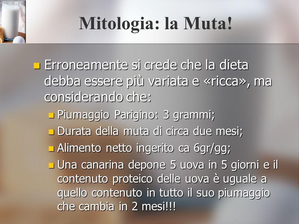 Mitologia: la Muta! Erroneamente si crede che la dieta debba essere più variata e «ricca», ma considerando che: Erroneamente si crede che la dieta deb