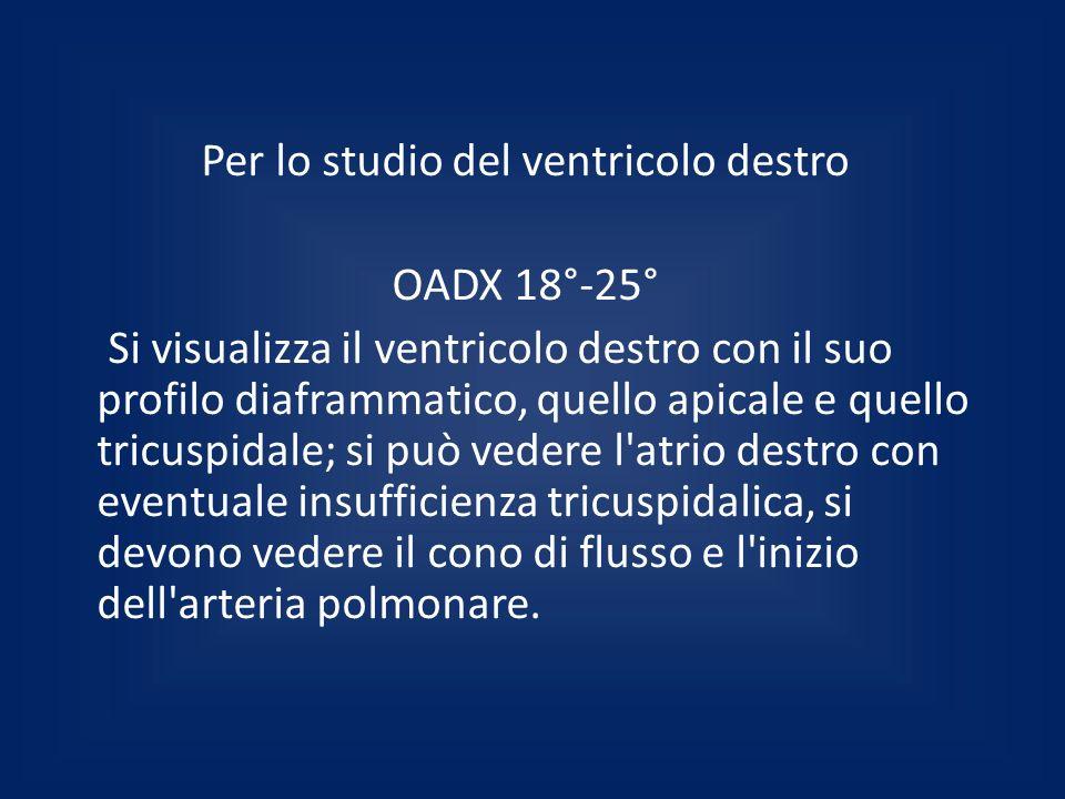 Per lo studio del ventricolo destro OADX 18°-25° Si visualizza il ventricolo destro con il suo profilo diaframmatico, quello apicale e quello tricuspi