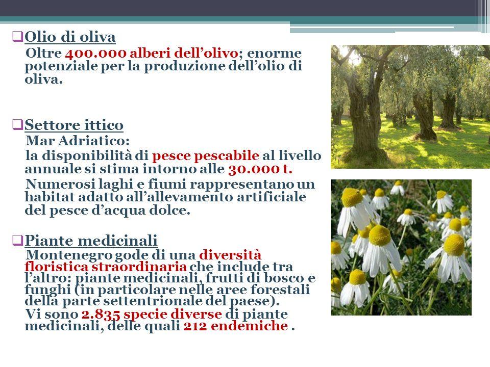 Olio di oliva Oltre 400.000 alberi dellolivo; enorme potenziale per la produzione dellolio di oliva. Settore ittico Mar Adriatico: la disponibilità di