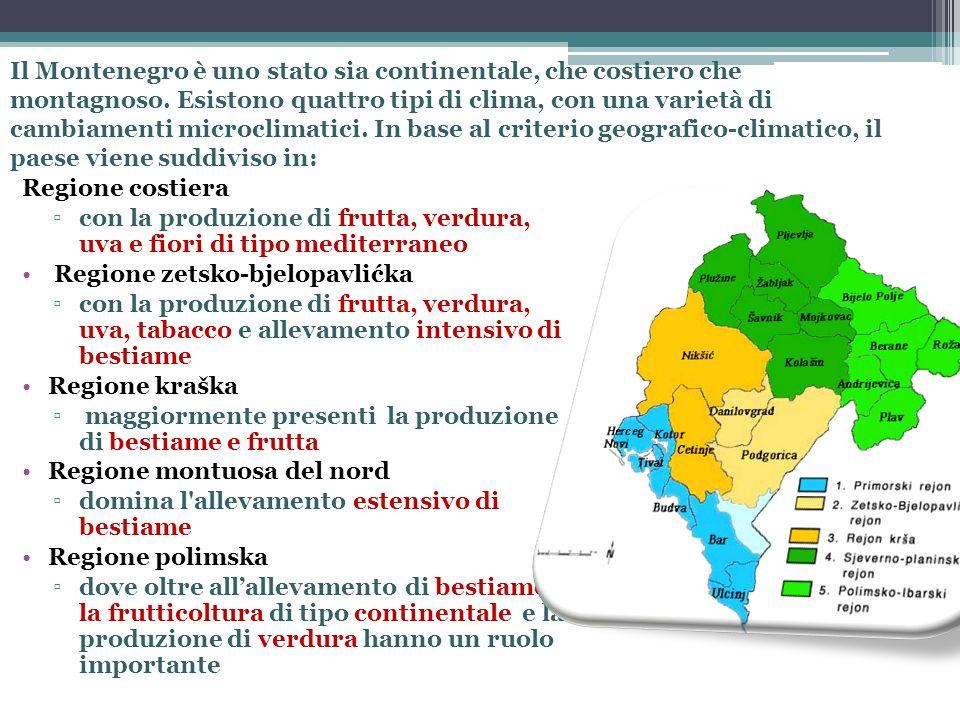 Caratteristiche principali dellagricoltura montenegrina Rilevanza economica – contribuisce con il 7,4 % al PIL del paese Agricoltura orientata allauto-consumo, basata su aziende di piccole dimensioni (l80% non supera i 5 ettari), con un limitato impiego di tecnologie.