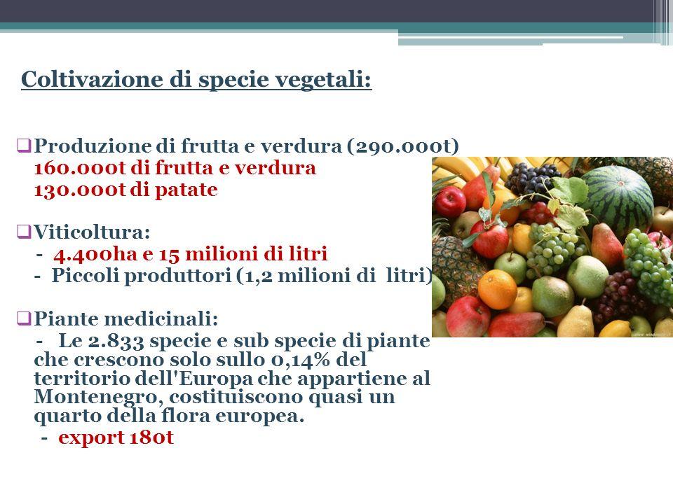 Coltivazione di specie vegetali: Produzione di frutta e verdura (290.000t) 160.000t di frutta e verdura 130.000t di patate Viticoltura: - 4.400ha e 15