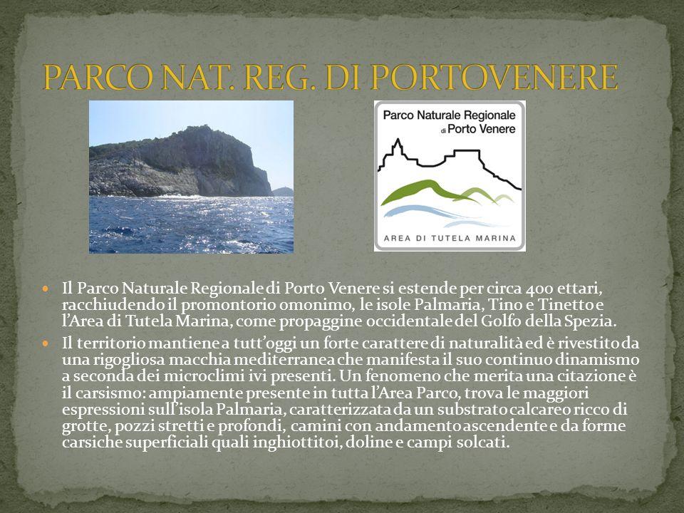 Il Parco Naturale Regionale di Porto Venere si estende per circa 400 ettari, racchiudendo il promontorio omonimo, le isole Palmaria, Tino e Tinetto e