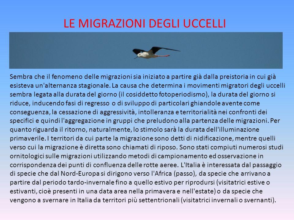 LE MIGRAZIONI DEGLI UCCELLI Sembra che il fenomeno delle migrazioni sia iniziato a partire già dalla preistoria in cui già esisteva un'alternanza stag