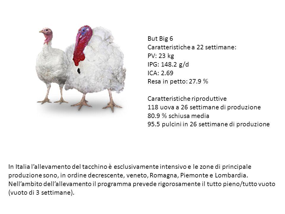 But Big 6 Caratteristiche a 22 settimane: PV: 23 kg IPG: 148.2 g/d ICA: 2.69 Resa in petto: 27.9 % Caratteristiche riproduttive 118 uova a 26 settiman